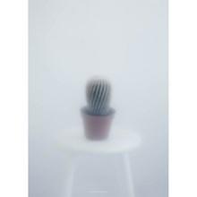 Kristina Dam Plakat Ball Cactus 2