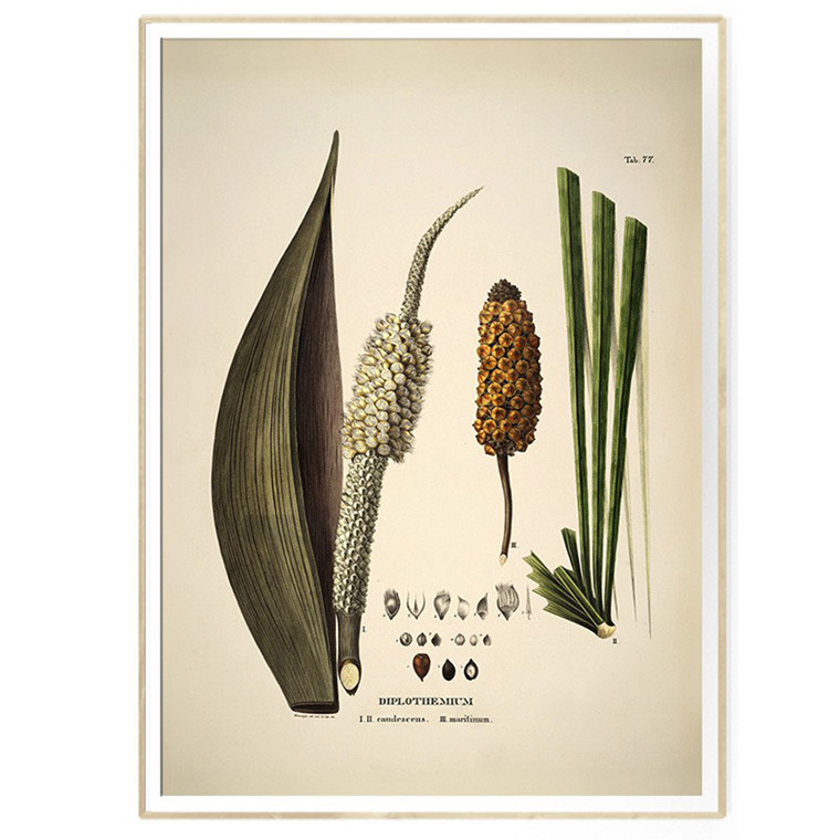 The Dybdahl Co DIPLOTHEMIUM caudescens & maritimum Botanical Palm Print