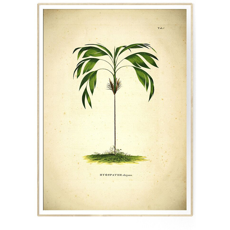 The Dybdahl Co HYOSPATHE elegans - Botanical Palm Print