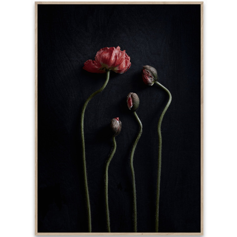 Paper Collective Plakat Still Life 02 - Red Poppies
