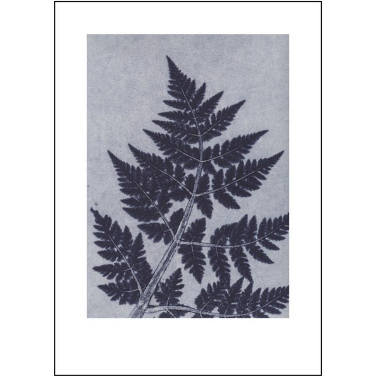 Pernille Folcarelli Plakat Chervil Indigo 50x70 cm
