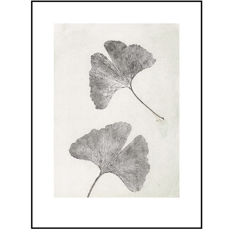 Pernille Folcarelli Illustration Gingko Oyster 30x40