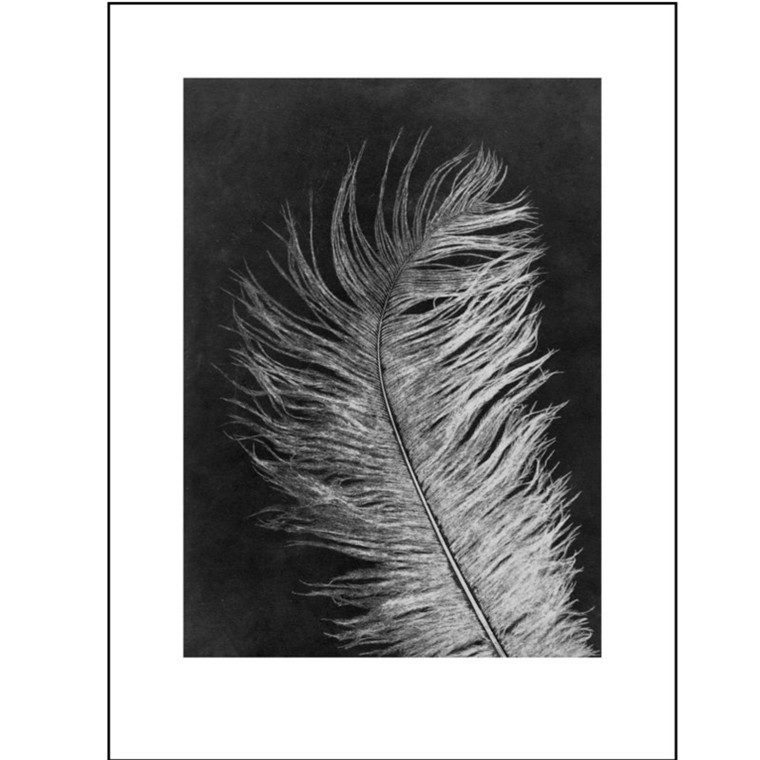 Pernille Folcarelli Illustration Feather White 30x40 cm