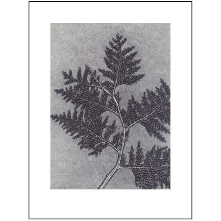 Pernille Folcarelli Illustration Thuja Smoke 30x40 cm