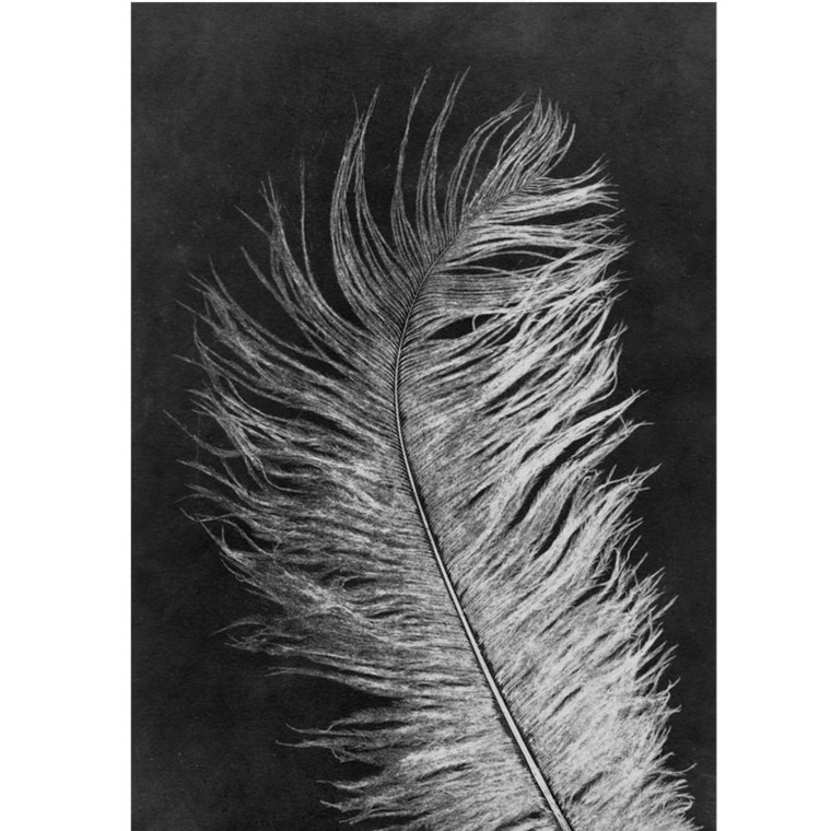Pernille Folcarelli Postkort Feather White