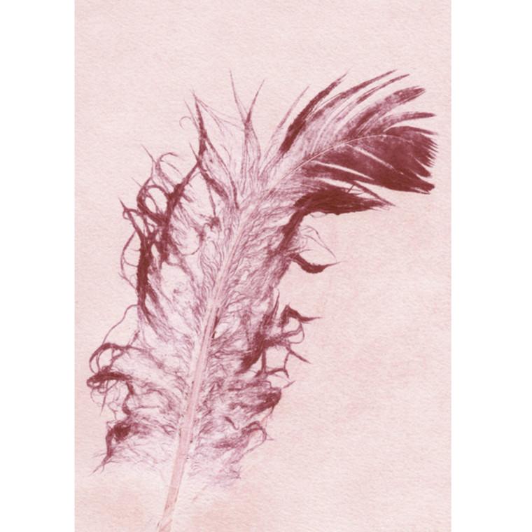 Pernille Folcarelli Postkort Feather Rosa