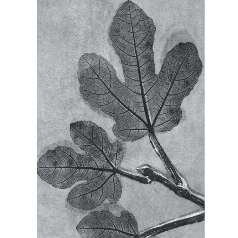 Pernille Folcarelli Postkort Fig Charcoal