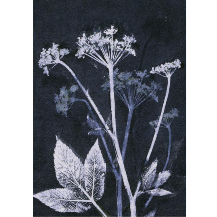 Pernille Folcarelli Postkort Groundelder Blue