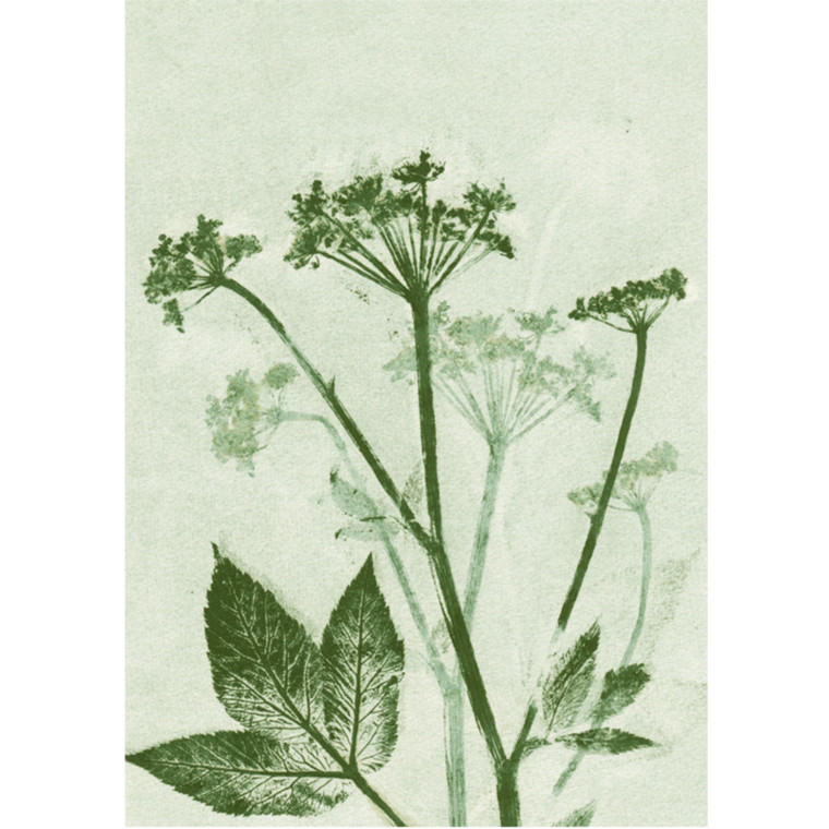 Pernille Folcarelli Postkort Groundelder Green