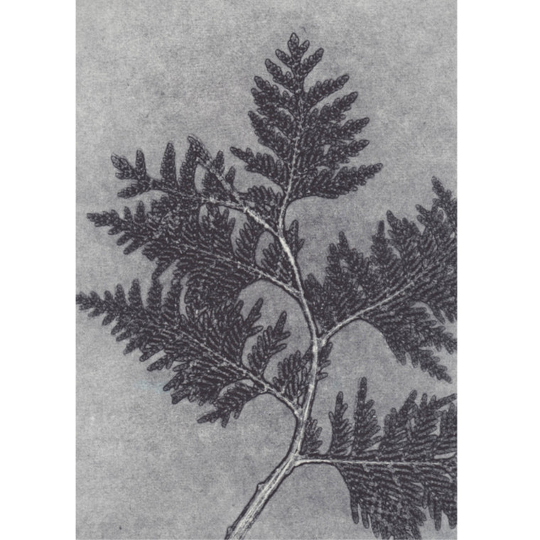 Pernille Folcarelli Postkort Thuja Grey