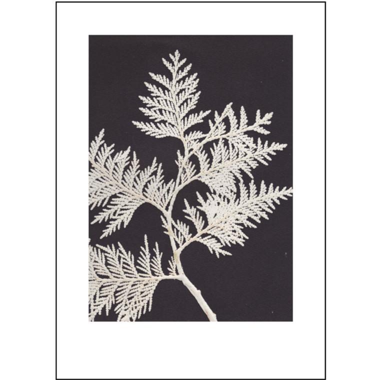 Pernille Folcarelli Plakat Thuja Hvid 50x70 cm