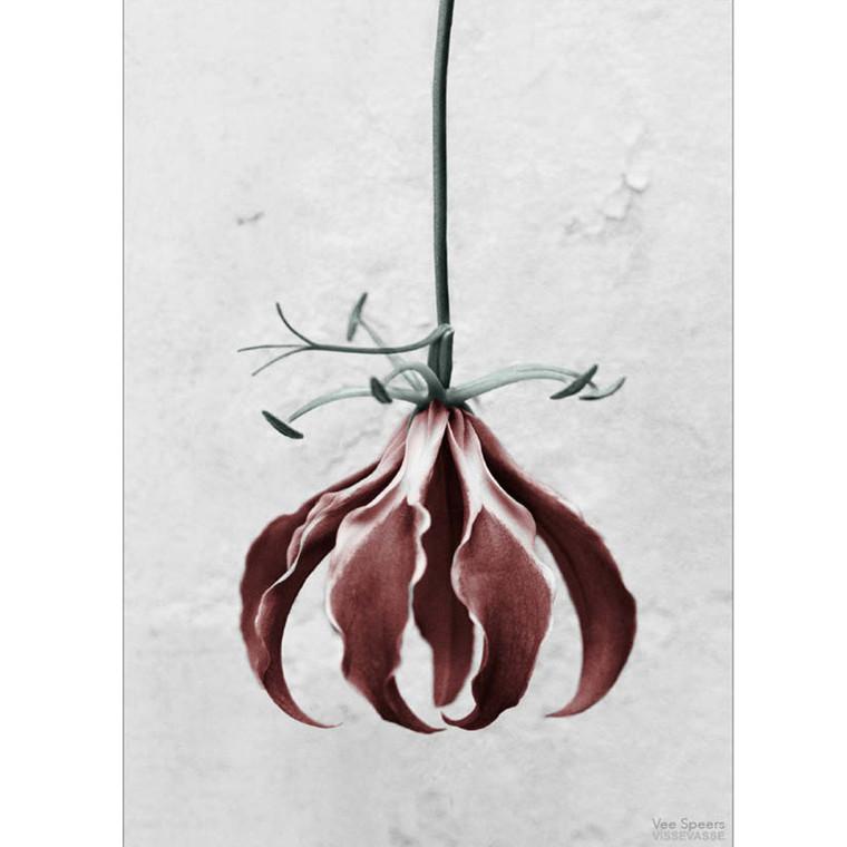 Vee Speers Plakat Botanica Gloriosa Superba