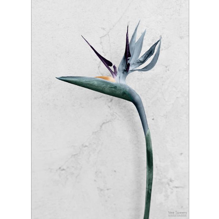 Vee Speers Plakat Botanica Strelitzia Reginae
