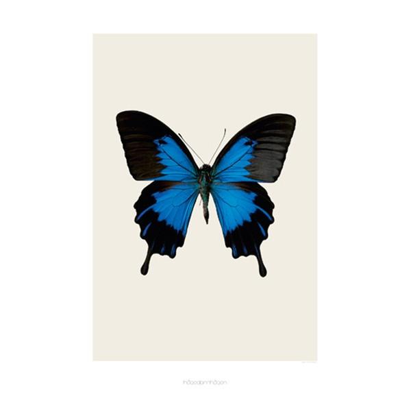 butterfly til mænd