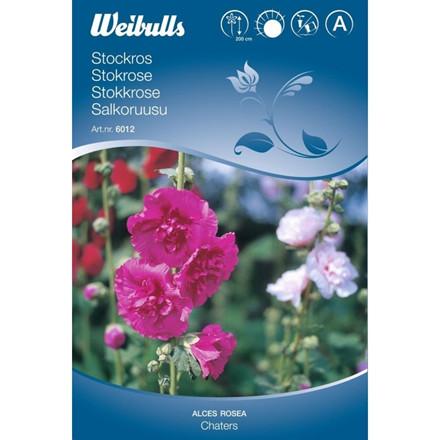 Stokrose - Alcaea rosea - Chaters mix - Frø (W6012)