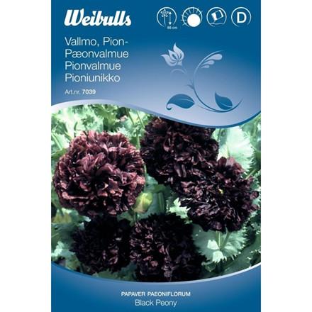 Pæonvalmue - Papaver Paeoniflorum-gruppen - Black Peony - Frø (W7039)