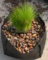 Vandplantepose, rund 15 cm. i diameter.