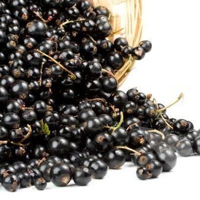 Ribes nigrum 'Ben Nevis'.  - Salgshøjde: 30-50 cm. - Solbær (NP)