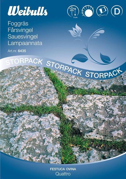 Fåresvingel - Festuca ovina, Stor pose - Frø (W6435)