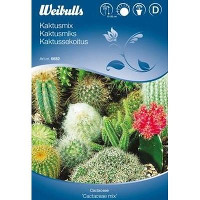 Kaktusmix - Cactaceae mix - (W6682)