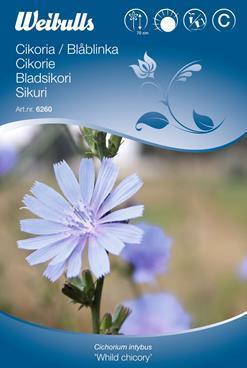 Cikorie - Cichorium intybus 'Wild Chicory' - (W6260)