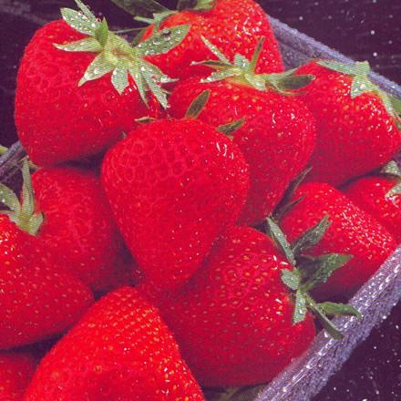 Jordbær 'Darselect' - 5 stk.