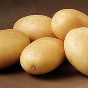 Ditta - Lægge Kartoffel - Pose m/2 kg.