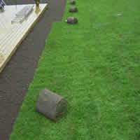 Rullegræs (50 - 288 m2)