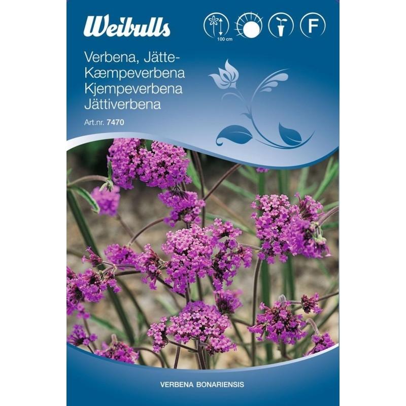 Stor Verbena - Verbena bonariensis - Frø (W7470)