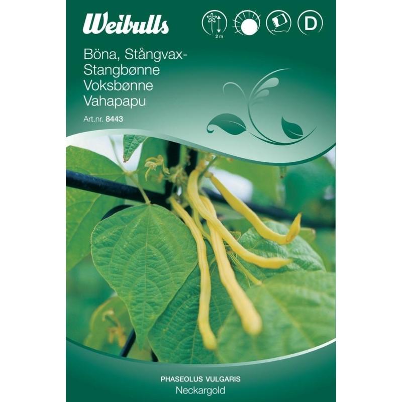 Stangbønne - Phaseolus vulgaris - Neckargold - Frø (W8442)