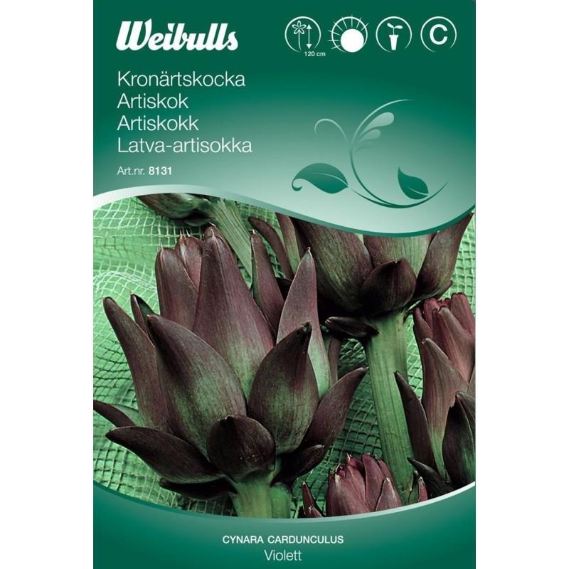 Artiskok - Cynara cardunculus - Violet - Frø (W8132)