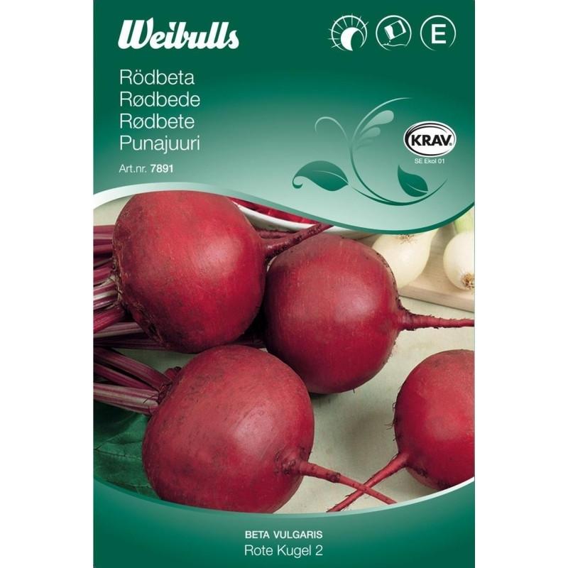 Rødbede - Beta vulgaris - Rote kugel 2 - KRAV -  Frø (W7892)
