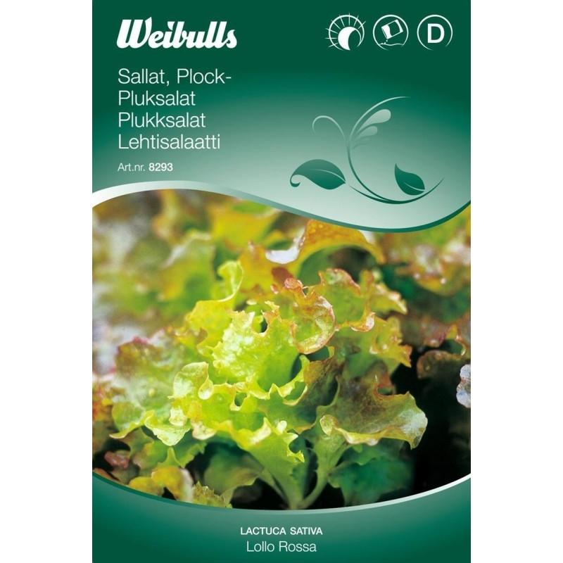 Pluksalat - Lactua sativa - Lollo Rossa - Frø (W8290)