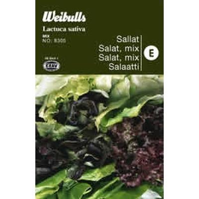 Salat mix - Lactua sativa - KRAV - Frø (W8306)