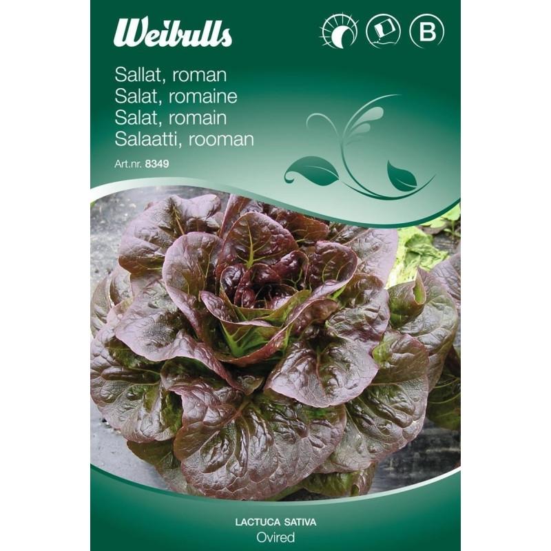 Salat, Romanie - Lactuca sativa - Ovired - Frø (W8349)