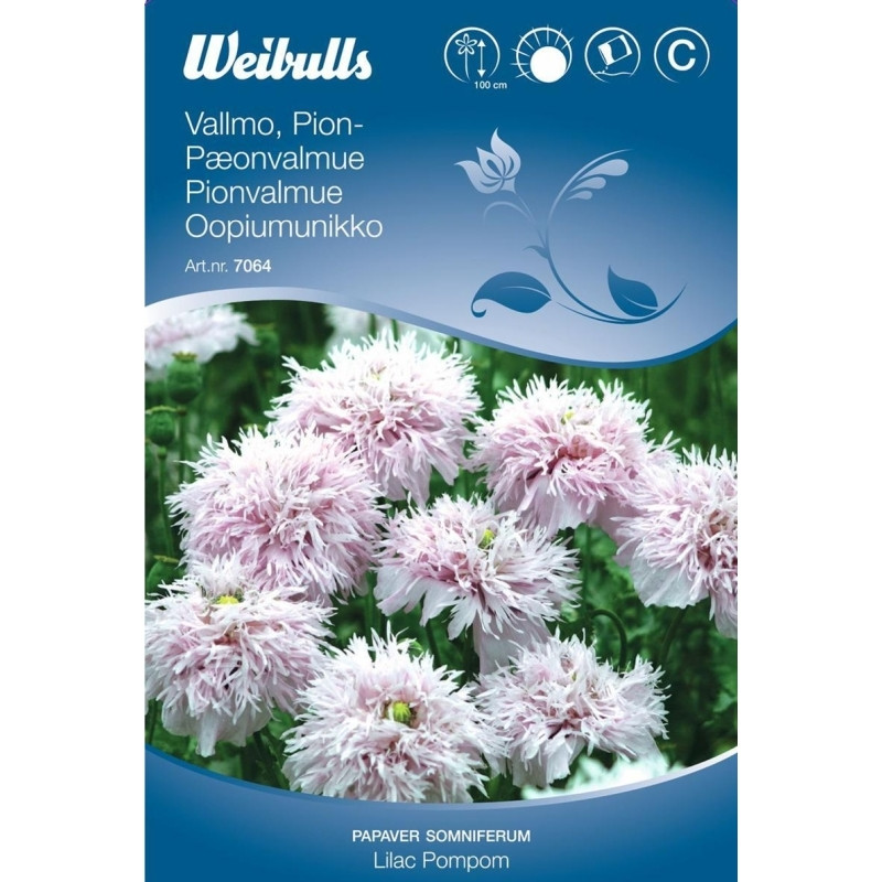 Opiumvalmue - Papaver somniferum Paeoniflorum - Lilac PomPom  - Frø (W7064)
