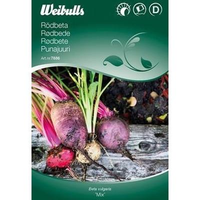 Rødbede - Beta vulgaris 'Mix' - (W7887)