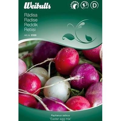 Radise - Rhaphanus sativus - Easter egg mix - Frø (W8567)