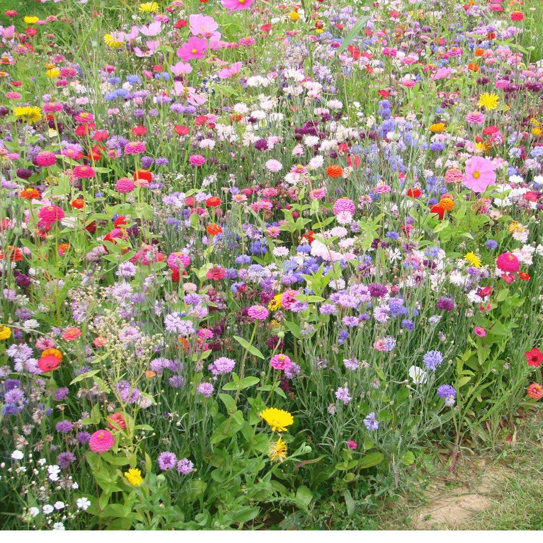Blomstermark - 1-årige sommerblomster- 1 kg. Pose. - Frø (P722401)