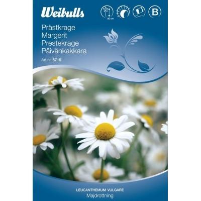 Margerit - Leucanthemum vulgare - Majdronning - Frø (W6715)
