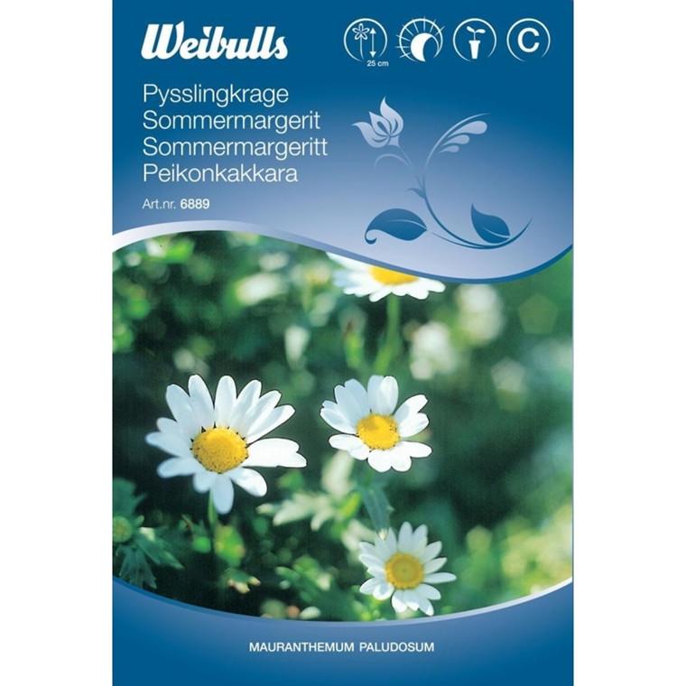 Margerit, sommer - Mauranthemum paludosum - Frø (W6889)
