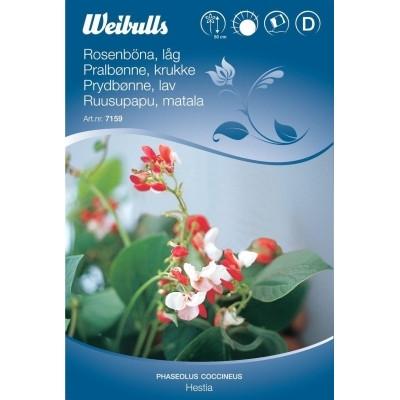 Pralbønne til krukke - Phaseolus coccineus - Hestia - Frø (W7159)