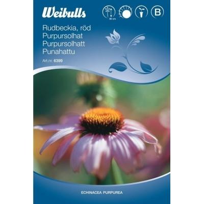 Purpursolhat rød - Echniacea purpurea - Frø (W6399)