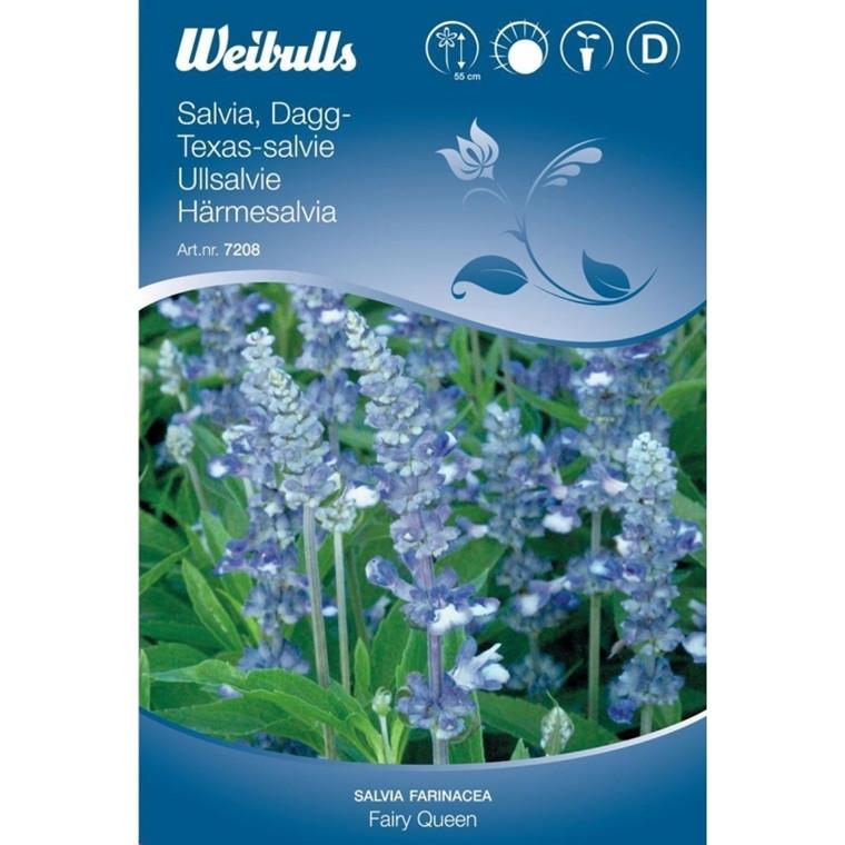 Texas-salvie - Salvia farinacea - Fairy Queen - Frø (W7208)