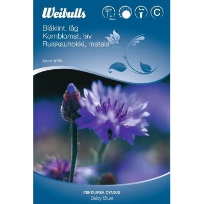 Kornblomst, lav - Centaurea - Frø (W6193)