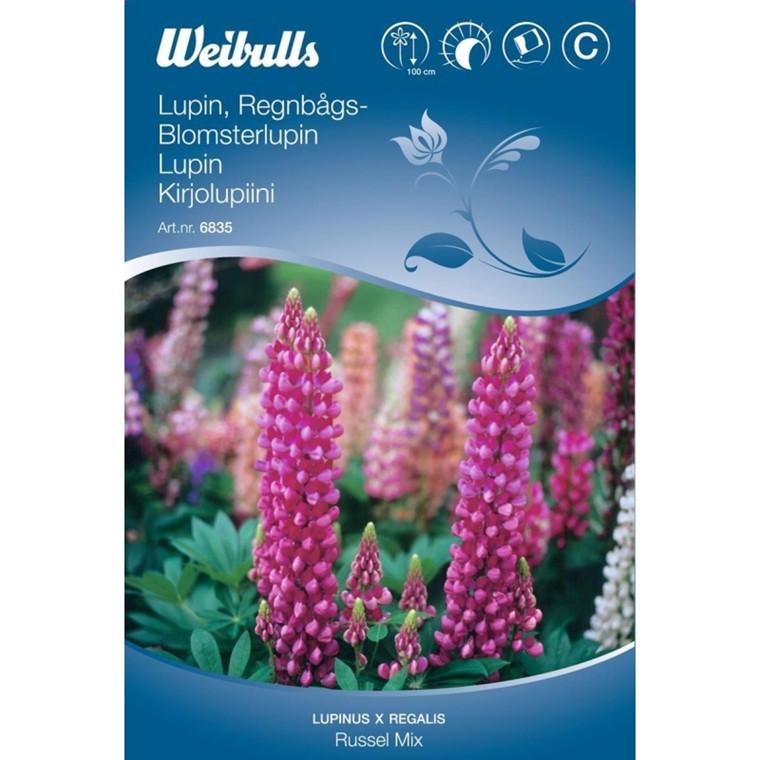Lupin - Lupinus x regalis - Russel mix - Frø (W6835)
