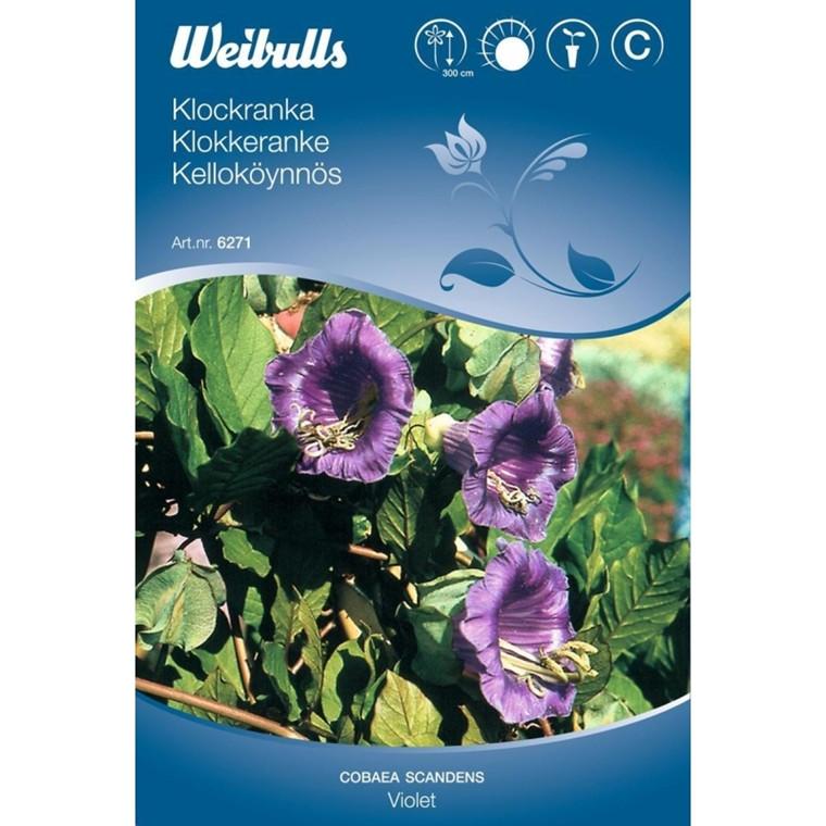 Klokkeranke - Cobaea scandens - Violet - Frø (W6271)