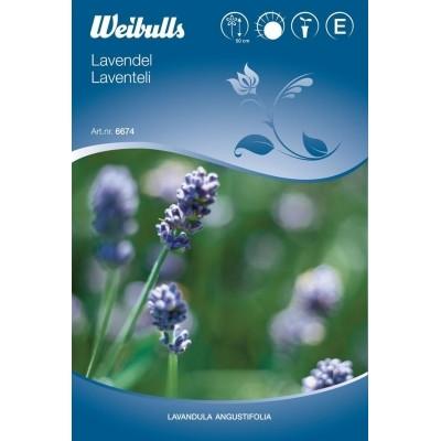 Lavendel - Lanvendula angustifolia - Frø (W6674)