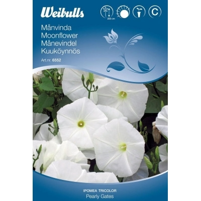 Tragtsnerle - Moonflower - Ipomea Tricolor - Pearly Gates - Frø (W6552)