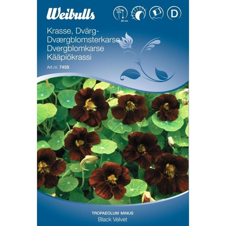 Blomsterkarse - Tropaelum minus - Black Velvet  - Frø (W7459)